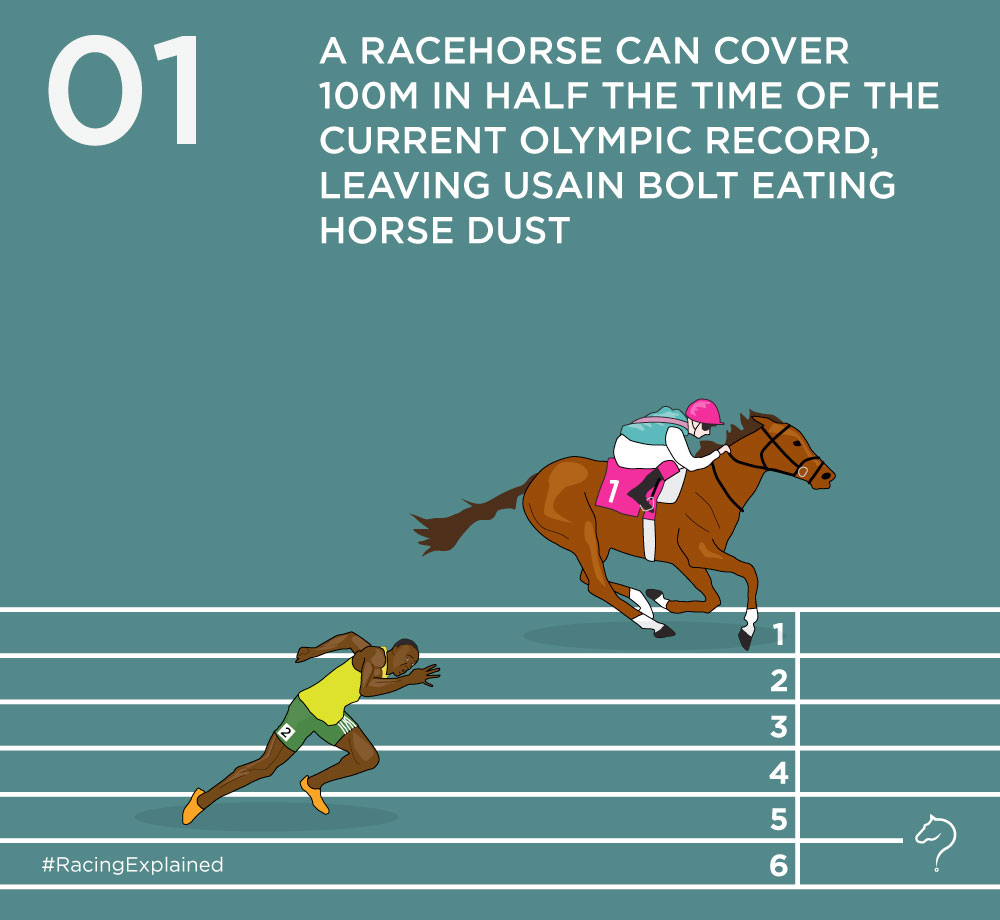 How fast are racehorses? – Racing Explained