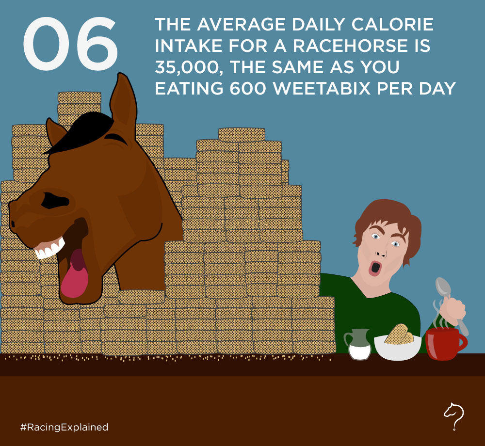 What does a racehorse eat? – Racing Explained