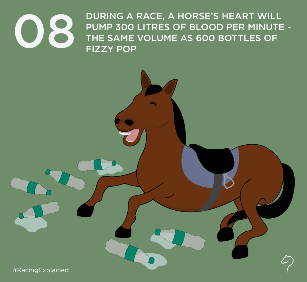 What happens to racehorse during a race? – Racing Explained